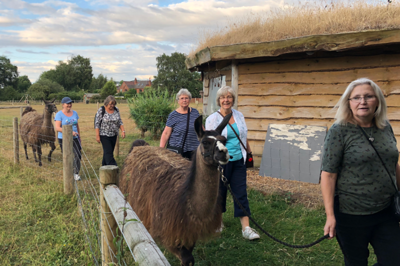Llama Trek For Whittington Trefoil Guild